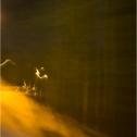 bewegt-mausfeld-orange-lichtgestalt