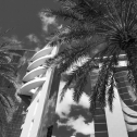 schwarz-weiss-mausfeld-palmen