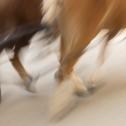 sequenzen-mausfeld-pferde-3