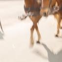 sequenzen-mausfeld-pferde-4
